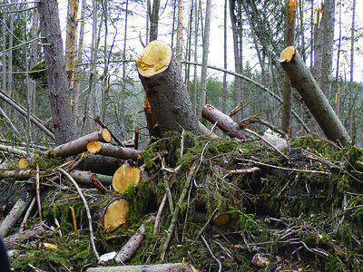 eversource-cleaning-up-diseased-stressed-trees