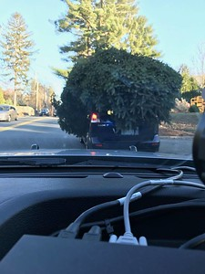 police-stop-car-with-massive-christmas-tree-on-top