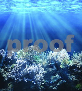 scientists-monitor-effects-of-harvey-other-storms-on-reefs