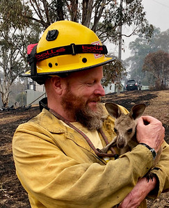 berlin-animal-hospital-collecting-aid-for-australian-wildlife-affected-by-fires