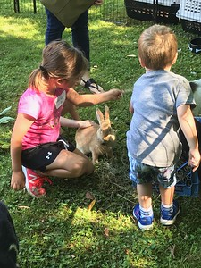petting-zoo-delights-kids-at-manross-library
