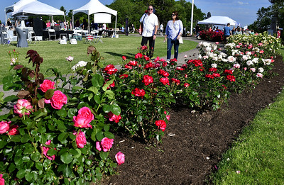 rose-garden-festival-returns-this-summer-to-walnut-hill-park
