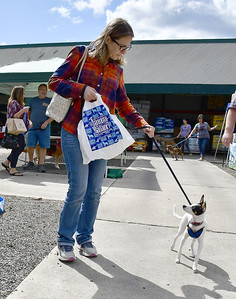 animals-find-their-forever-homes-at-bark-bq-party-to-benefit-help-willys-friends-in-southington
