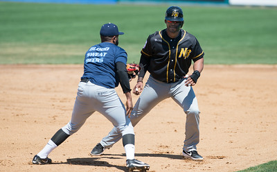 new-britain-bees-infielder-rosa-has-contract-purchased-by-tabasco-of-mexican-league