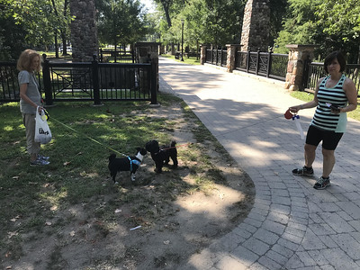 children-play-and-dogs-go-for-walks-at-rockwell-park-on-labor-day