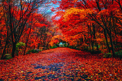 leaf-collection-in-plainville-set-to-begin-oct-21