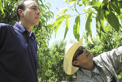 california-high-court-to-decide-legality-of-farm-worker-law