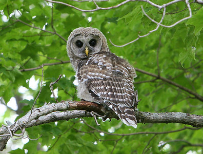 journeys-with-jim-encountering-owls-and-a-fond-farewell