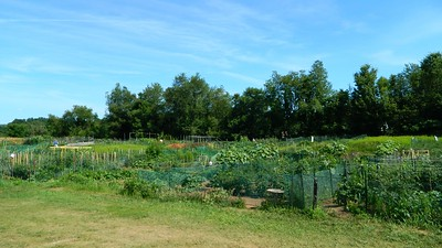 newingtons-community-gardens-offers-residents-fun-safe-way-to-get-outdoors