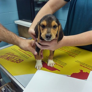 southington-police-release-photos-of-car-suspected-to-be-involved-in-abandonment-of-neglected-puppy