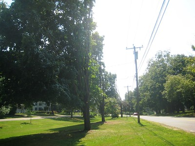 newington-taking-comprehensive-inventory-of-its-trees