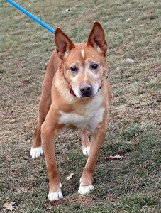 ct-humane-society-senior-dogs-fetch-grant