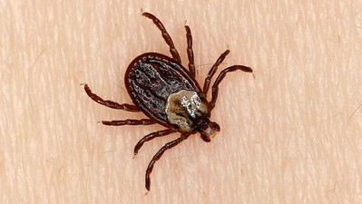tick-populations-on-the-rise-in-connecticut