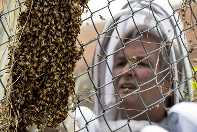scientists-decry-death-by-1000-cuts-for-worlds-insects