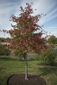 plymouth-beautification-committee-planting-tree-to-honor-those-who-died-from-covid19-inviting-residents-to-speak-about-loved-ones