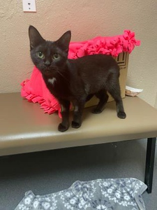 pet-of-the-week-cleopatra