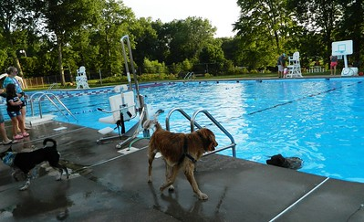 pooches-have-run-of-pool-for-an-evening-in-newington